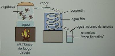 ¿A qué huelen los perfumes? De las notas olfativas a la obtención de las materias primas