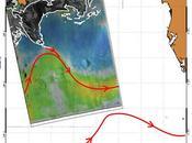 Imagen satélite: vertido crudo llegando Corriente Golfo