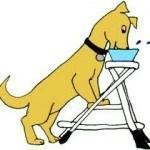 Tratamiento-no-quirúrgico-Perros-con-Mega-Esófago