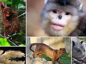 Animales extraños seguramente desconocías existieran.