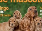 Feria Solidaria Mascotas Tres Cantos