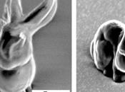 Científicos crean resina para moldear estructuras microscópicas complejas