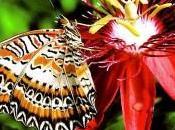 Mariposas moda. Joyería Plata Online