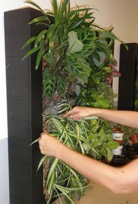 curso profesional de jardines verticales paperblog