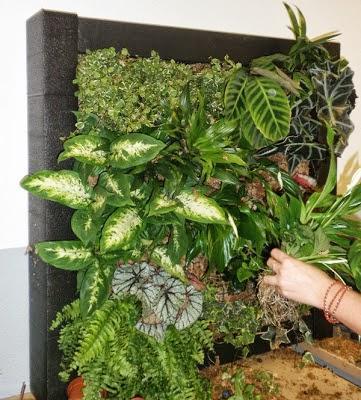Curso profesional de jardines verticales en madrid paperblog for Jardines verticales alicante