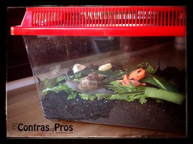 De tener caracoles en casa paperblog for Caracol de jardin
