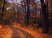 Paisajes otoño.