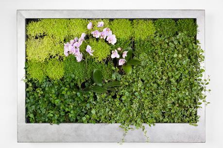 Jardines enmarcados naturaleza viva en el sal n de tu for Jardines verticales introduccion