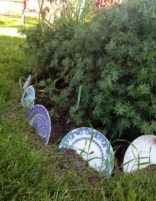 d0b9927e43df Frío o Caliente?: Platos como borduras para cercar plantas en el ...