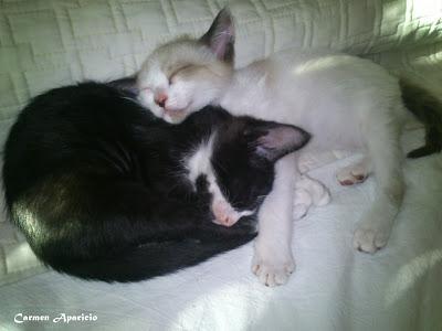 Los gatitos de Candi