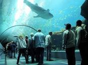Bienvenido mundos agua: Acuarios impresionantes mundo!
