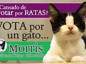 Morris, gato candigato para México