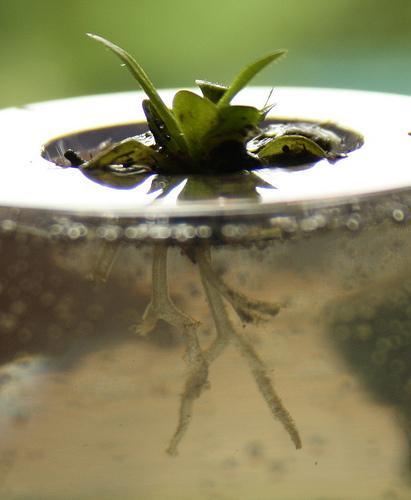Digestión en plantas