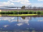 Castilla-La Mancha, Mancha húmeda
