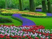 Poesía Vida: Jardín mágico pensamientos