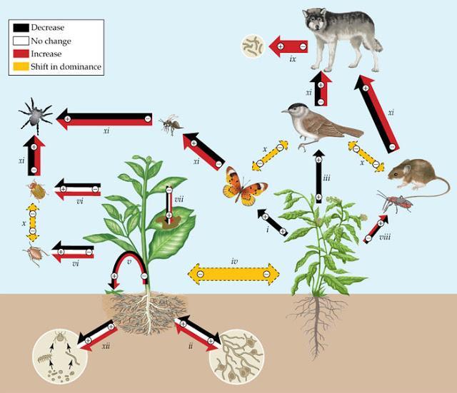 Applied Soil Ecology