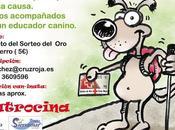 Can-inata Solidaria Cruz Roja Pasea perro buena causa