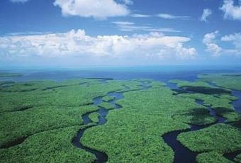 parque nacional everglades fica - photo #42