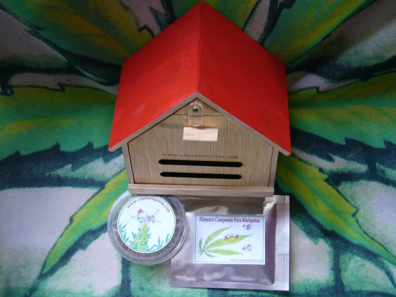Kit cultivo de interior paperblog for Cultivo interior casero