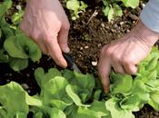 Cultiva propio huerto ecológico