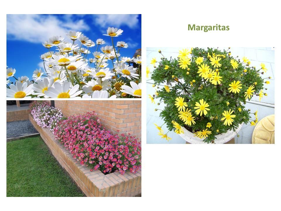 Jardineras de verano paperblog for Que plantas poner en una jardinera