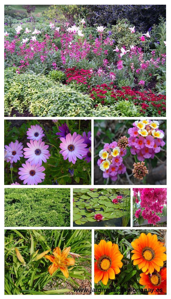 Elementos decorativos para el exterior paperblog for Arboles decorativos para jardin