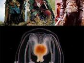Medusa inmortal