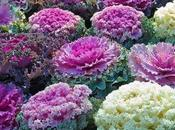 Flores para boda temporada