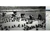 Evolución modo cultivo (1940-1975)