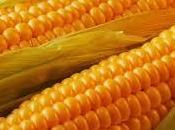 Cómo sembrar semillas maíz