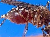Mosquitos Verano
