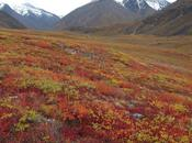 Biomas, Tundra