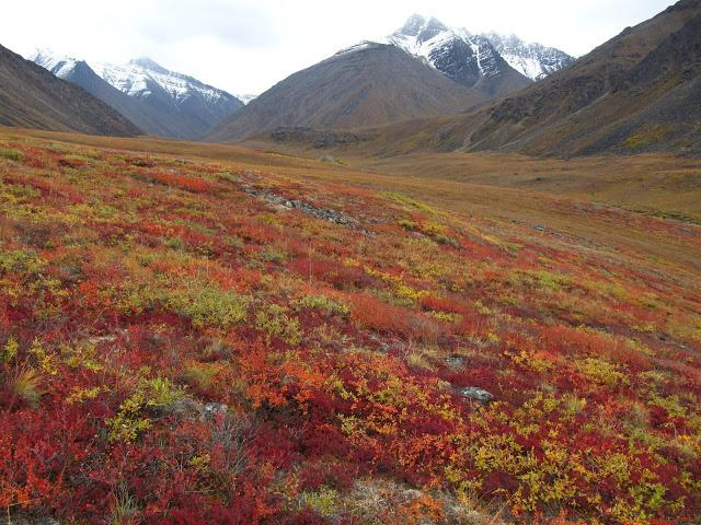 tundra essay An essay or paper on the impact of tundra biome compared with other biomes, the tundra biome is relatively young, having its origin in the pleistocene (1,600,000 to.