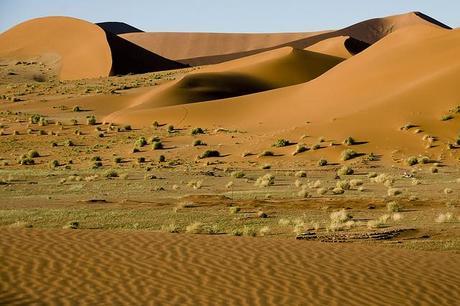 Bioma, Desierto