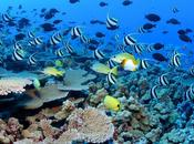 Ecosistemas agua salada, arrecifes coral