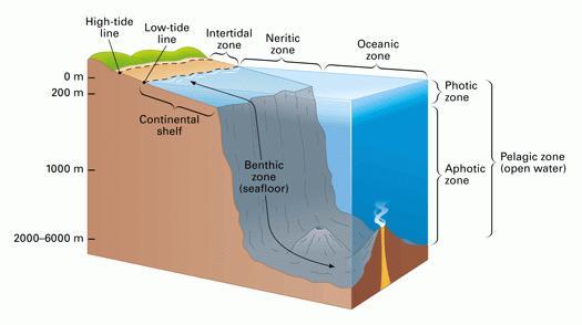Ecosistemas de agua salada, zona nerítica