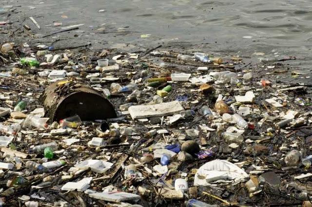 ecosistemas de agua salada influencia humana paperblog