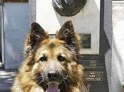 Adiós héroe: Ájax perro policía muerto