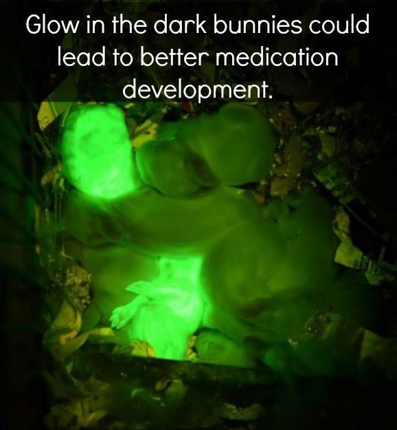 Conejos fluorescentes