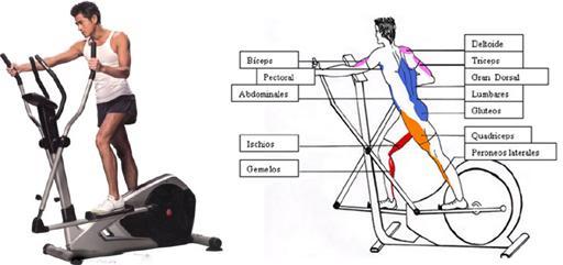 Bicicleta eliptica sirve para adelgazar piernas