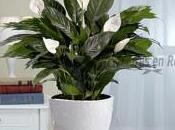 ¿CUAL PLANTA OXIGENO PRODUCE?La planta Spat...