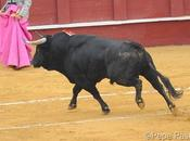 ¡Todavía quedan toros bravos!