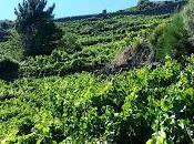 Enoturismo III: Viticultura Heroica