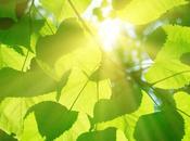 Introducción fotosíntesis Parte