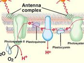Introducción funcionamiento fotosistemas