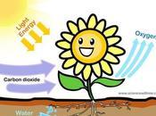 Introducción centros reacción fotosíntesis
