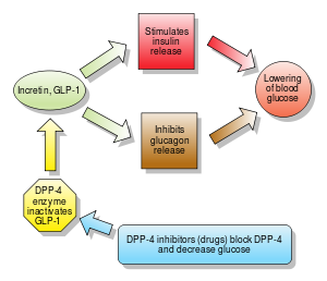 Action of GLP-1 and DPP-4 inhibitors.