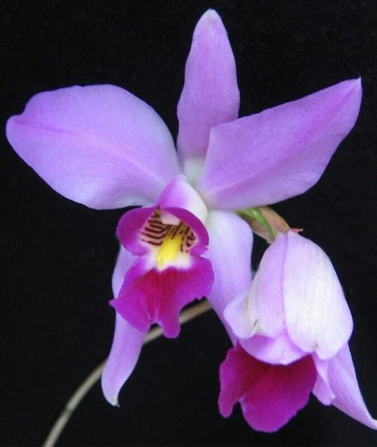 Charla sobre Orquídeas Mexicanas