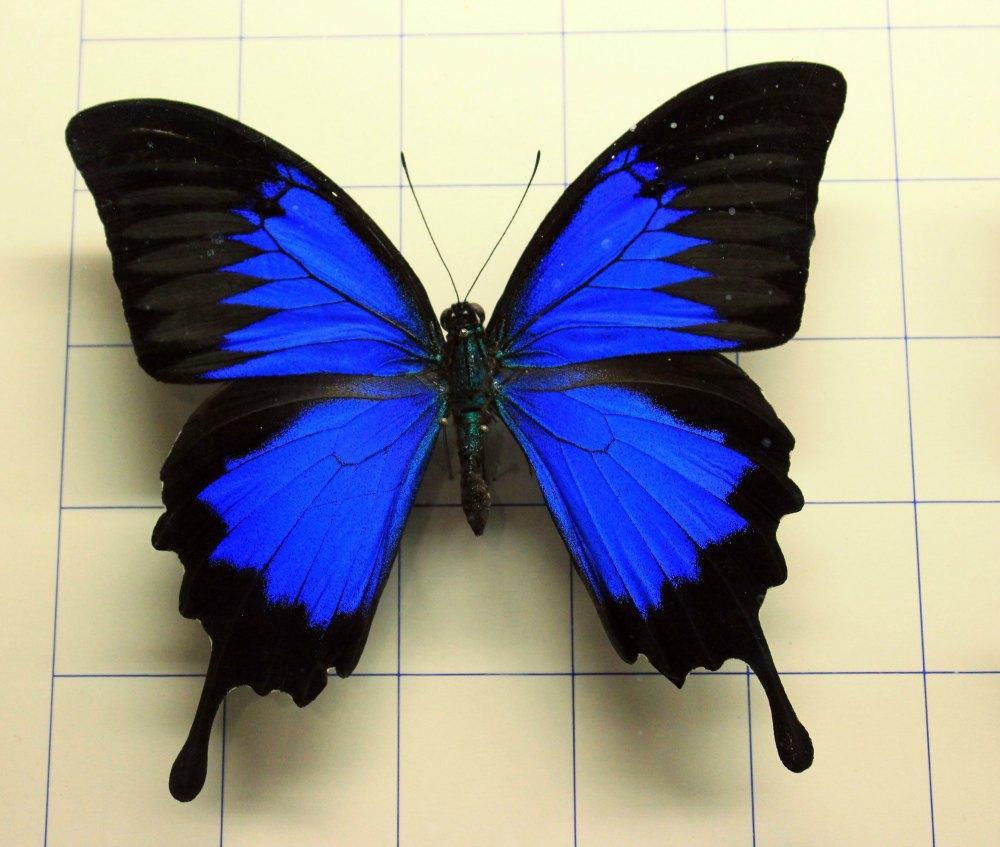Mariposa con colores vivos imagui - Imagenes de mariposas de colores ...
