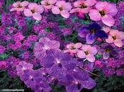 Flores Bach, preguntas frecuentes